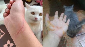 7 Potret Ulah Kucing Bandel Cakar Majikan Ini Bikin Ngilu