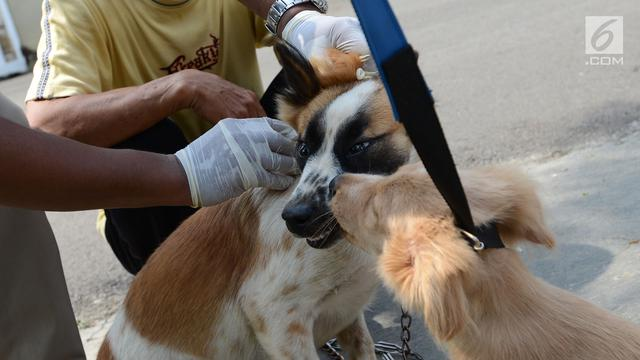 Apa itu Rabies (penyakit anjing gila)?