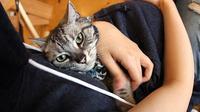 Anda tak lagi perlu repot membawa kandang kucing untuk membawa peliharaan Anda jalan-jalan (sumber boredpanda.com)