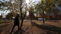 Seorang pria yang memakai masker sebagai pencegahan terhadap virus corona COVID-19 berjalan dekat pepohonan saat musim gugur di Seoul, Korea Selatan, Rabu (11/11/2020). (AP Photo/Lee Jin-man)