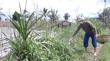 Sudah 5 hari kawasan Tabanan, Bali diselimuti abu vulkanik Gunung Agung. Warga akhirnya harus memakai masker untuk beraktivitas.