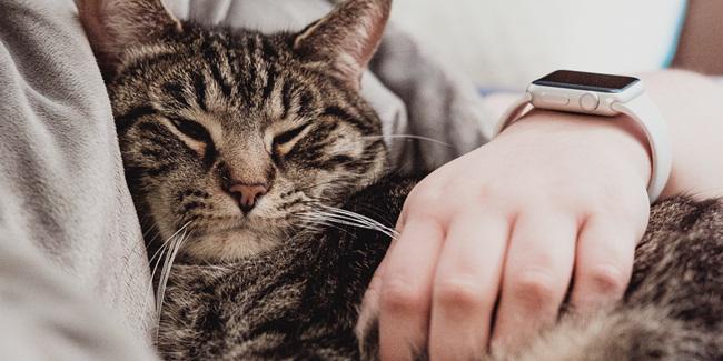 Memelihara kucing membuat hidup bahagia/copyright Unsplash.com/Chris Abney