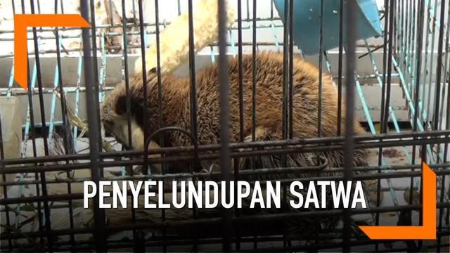 Polda Jatim membongkar komplotan penyelundup Satwa yang dilindungi. Satwa-satwa tersebut diantaranya komodo, kucing hutan, trenggiling, dan lutung Jawa. Kebanyakan dari Satwa-satwa ini dijual ke luar negeri