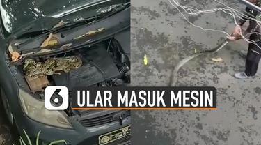 Sebuah ular ditemukan masuk dalam mesin mobil polisi.