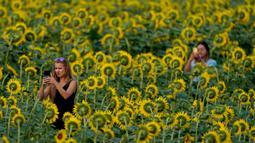 Orang-orang mengabadikan gambar di ladang bunga matahari di Grinter Farms, dekat Lawrence, Kansas pada 7 September 2020. Ladang seluas 26 acre yang ditanam setiap tahunnya oleh keluarga Grinter itu menarik ribuan pengunjung selama akhir musim panas saat mekarnya bunga. (AP Photo/Charlie Riedel)