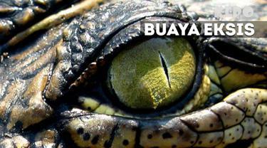 Reptil tak selamanya membahayakan jika ditangani dengan benar. Buktinya mereka bisa ikut andil dalam berbagai kegiatan manusia.