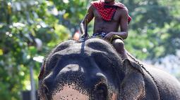 Seekor gajah mengangkut kayu jelang festival Perahera di Kuil Gangaramaya di Kolombo, Sri Lanka (18/2).  Prosesi Navam Budha dalam festival Perahera tersebut berlangsung 18-19 Februari. (AFP Photo/Ishara S. Kodikara)