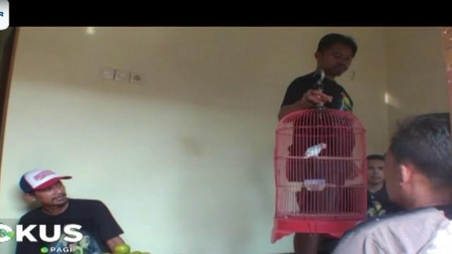 Seekor burung love birdjenis biola blue misalnya, dibuka dengan harga Rp 1 juta dan akhirnya dilepas kepada penawar tertinggi sebesar Rp 6,5 juta.