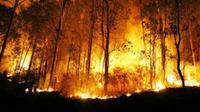 Beberapa peristiwa kebakaran hutan ini disebut sebagai kebakaran hutan terbesar dalam sejarah