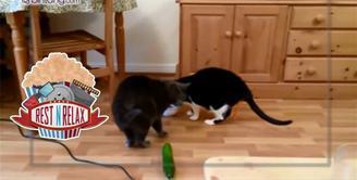 Saat kucing melihat mentimun, kenapa selalu terkejut hingga melompat ke udara?