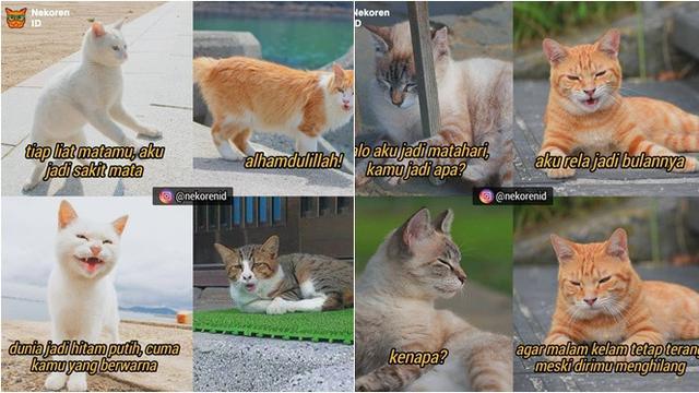 7 Meme Gombalan Kucing Oranye Ini Kocak Bikin Gemas Hot Liputan6 Com