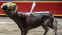 Matador asal Kolombia, David Martinez diseruduk banteng saat bertarung di arena adu banteng La Macarena di Medellin, Kolombia, (3/2). (AFP Photo/Joaquin Sarmiento)