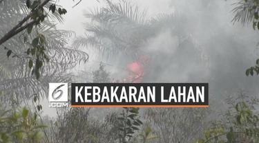 Kebakaran lahan gambut terus terjadi di Sumatera Selatan. Hingga kini tercatat sudah 60 hektar lahan yang terbakar dan menimbulkan kabut asap.