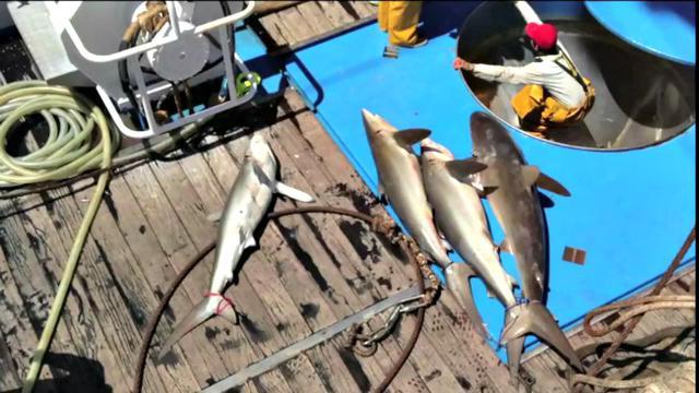 Seharga Alphard Ikan Ini Paling Diburu Kapal Asing Di Laut Ri Bisnis Liputan6 Com