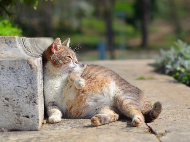 Ciri Ciri Kucing Hamil Dan Akan Melahirkan Pemilik Kucing Wajib Tahu Citizen6 Liputan6 Com