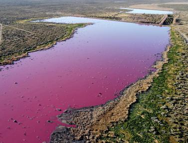 Laguna Argentina Berubah Warna akibat Limbah Pabrik