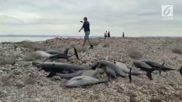 Peristiwa langka terjadi di Pantai  Baja California Sur, Meksiko. Puluhan lumba-lumba mati terdampar di pantai tersebut.