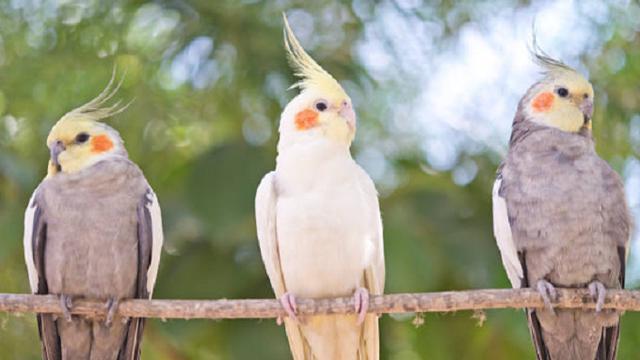 Ilustrasi burung (iStock)