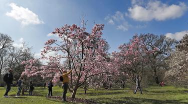 Para pengunjung menikmati bunga pohon magnolia di Kew Royal Botanic Gardens pada hari yang cerah di London (22/3/2021).  Kew Gardens telah dibuka satu tahun setelah penguncian terkait COVID-19 pertama di Inggris. (AP Photo/Frank Augstein)