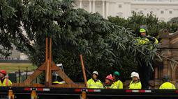 Pekerja memindahkan pohon Natal raksasa setibanya di bagian barat Gedung Capitol AS di Washington, Senin (26/11). Pohon Natal setinggi 24 meter itu diambil dari Hutan Nasional Willamette di Oregon. (AP Photo/Pablo Martinez Monsivais)