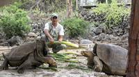 Petugas memberi makan kura-kura raksasa Galapagos di Taman Nasional Galapagos, Ekuador, 12 September 2017. Kura-kura Galapagos adalah yang terbesar di dunia dan salah satu hewan yang paling ramah di Galápagos. (HO / GALAPAGOS NATIONAL PARK / AFP)