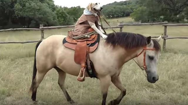 Shio Kuda dan Anjing