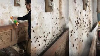 Aksi Pria Basmi Ratusan Kecoak di Tembok Rumah Ini Bikin Bergidik