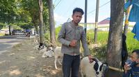 Galih, 24 tahun, salah seorang pedagang domba musiman di bilangan Persimpangan Pasir Muncang Garut mengatakan, sejak pandemi Corona datang, tingkat penjualan domba menjelang idul ada turun hingga 70 persen. (Liputan6.com/Jayadi Supriadin)