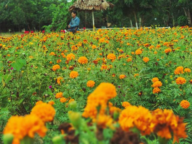 Pagi Warna Warni Bak Negeri Impian Di Taman Bunga Okura Pekanbaru Regional Liputan6 Com