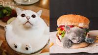 7 Foto Editan Kucing dalam Makanan Ini Kreatif Banget (sumber: Instagram.com/cats_in_food)