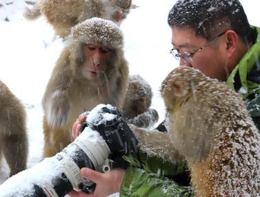 Tingkah Lucu Kera yang Akrab dengan Fotografer