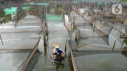 Petani menjala ikan mujair untuk dijual diantara keramba ikan hias di Situ Telaga Biru, Ciseeng, Bogor, Selasa (15/09/2020). Terdampak ekonomi akibat menurunnya daya beli masyarakat saat pandemi COVID-19, ratusan petani ikan hias di kawasan ini hanya bisa pasrah. (merdeka.com/Arie Basuki)