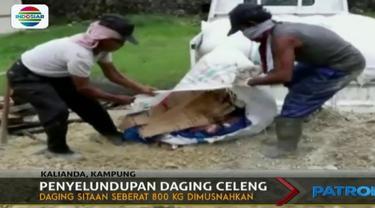 800 kilogram daging celeng yang hendak diselundupkan dari Bengkulu dimusnahkan  Balai Karantina Pelabuhan Bakauheni, Lampung.