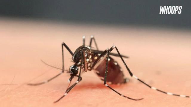 WHO mencabut darurat kesehatan virus Zika, sejak peneliti menemukan bakteri Wolbachia dapat memblokir penyebaran Zika.