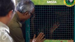 Petugas dari Kementerian Kehutanan dan Lingkungan Hidup saat melihat kondisi Orangutan di Jakarta, Selasa (9/2). Sebanyak tujuh orangutan akan dikembalikan ke habitatnya (Liputan6.com/JohanTallo)