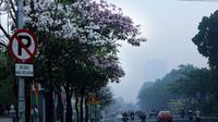 Bunga tabebuya di Surabaya (foto: Twitter/@BanggaSurabaya)