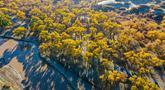 Foto dari udara yang diabadikan pada 18 Oktober 2020 ini menunjukkan pemandangan musim gugur di hutan poplar gurun (populus euphratica) di Wilayah Ejin, Daerah Otonom Mongolia Dalam, China utara. (Xinhua/Lian Zhen)
