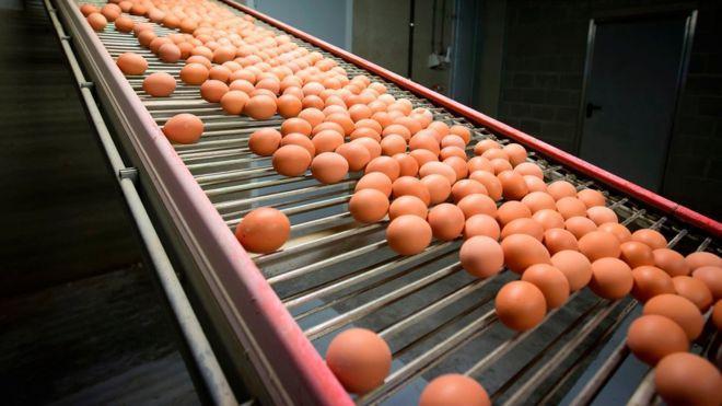 Ilustrasi telur (AFP)