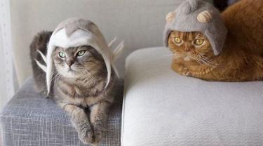 10 Potret Kucing Pakai Topi, Wajahnya Jadi Imut Banget