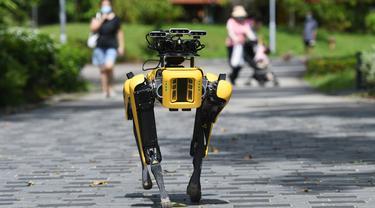 SPOT, robot anjing yang dapat mendeteksi apakah pengunjung memakai masker atau tidak menjalani uji coba putaran keduanya di Bishan Park Singapura, 22 September 2020. Uji coba ini bagian dari upaya melawan penyebaran COVID-19. (Xinhua/Then Chih Wey)