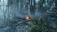Kebakaran melanda puluhan hektare kawasan penangkaran gajah di Taman Nasional Tesso Nilo (TNTN) Kabupaten Pelalawan, Riau. (Liputan6.com/M Syukur)