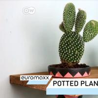 Cara Membuat Rak Tanaman Pot yang Indah. sumberfoto: DW English