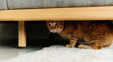 Kucing Sembunyi