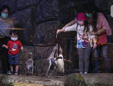Wisata Jakarta Aquarium Safari