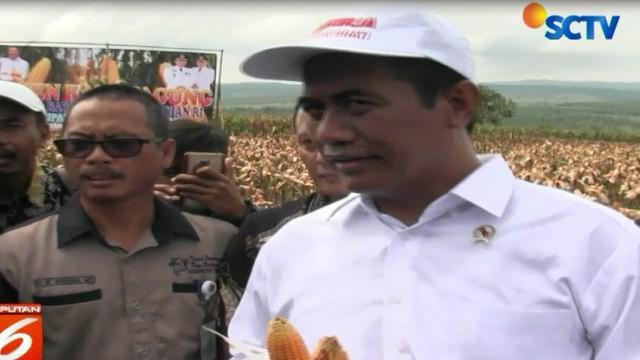 Mentan menargetkan Indonesia bisa mengekspor 500 ton jagung, mengingat hasil panen di sejumlah daerah tergolong surplus.