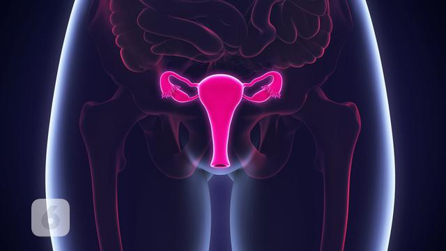 Payudara Besar Hingga Kelamin Ganda Ini 5 Kasus Aneh Pada Organ Seksual Global Liputan6 Com