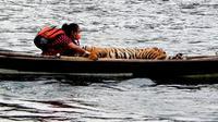 Dokter Yanti, Medik Veteriner atau dokter hewan di BKSDA Bengkulu, harus berkutat melakukan penyelamatan Harimau yang terus diburu oleh tangan rakus manusia (Liputan6.com/Yuliardi Hardjo)