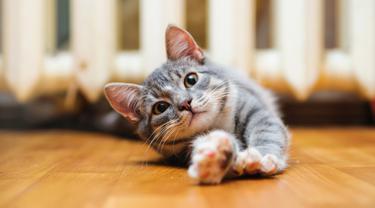 Kucing Mendadak Malas Main, 5 Hal Ini Bisa Jadi Penyebabnya