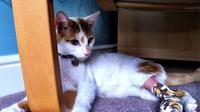 Kucing bernama Princess baru-baru ini mendapat lebih dari 10 ribu dolar yang didapat dari sumbangan untuk kekejaman terhadap hewan.