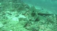 Penampakan jangkar yang jatuh di Deep Turbo, salah satu spot menyelam terbaik di Gili Trawangan. Jangkar tersebut merusak sejumlah terumbu karang. (Istimewa)